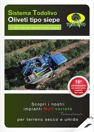 Olivo_IT
